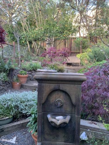 gardenncleaned