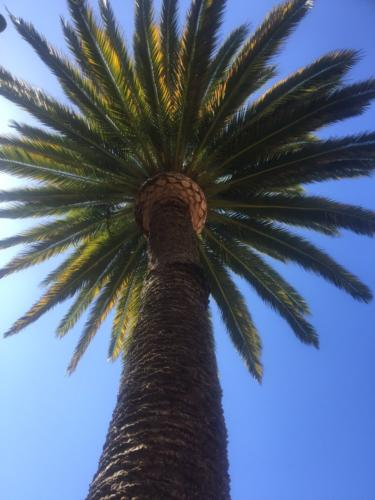 palmtreetrimm